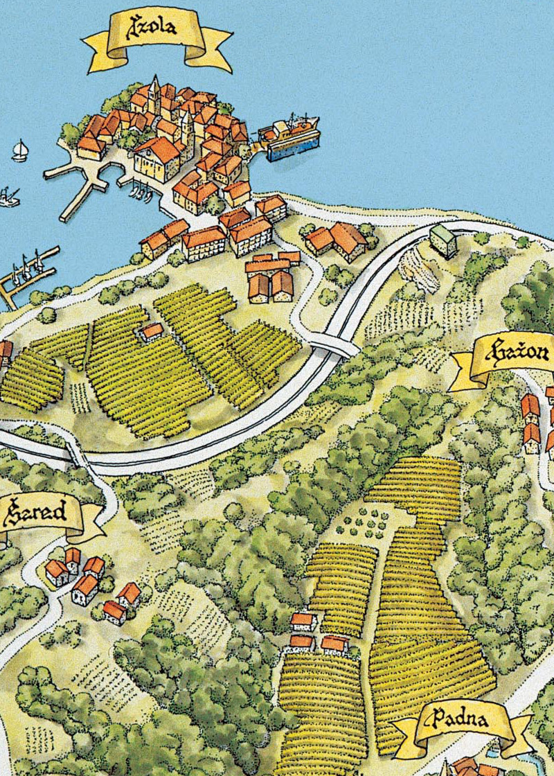 "Vineyards of ""Vina Koper"" Company"